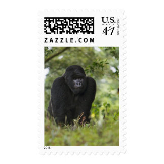 Mountain Gorilla and Silverback 6 Stamp