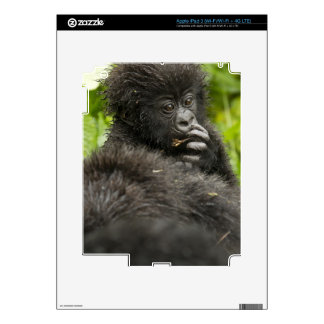 Mountain Gorilla, baby riding on mothers back Decals For iPad 3