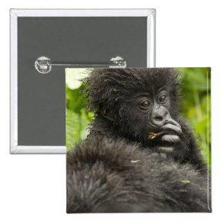 Mountain Gorilla, baby riding on mothers back Pinback Button