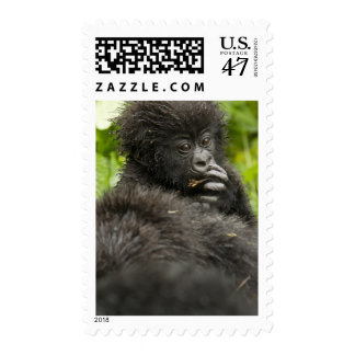 Mountain Gorilla, baby riding on mothers back Stamp