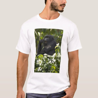 Mountain Gorilla, blackback, eating T-Shirt
