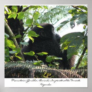 Mountain Gorilla, Bwindi Impenetrable... Poster