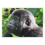 Mountain Gorilla Cards