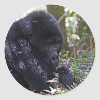 Mountain Gorilla Classic Round Sticker