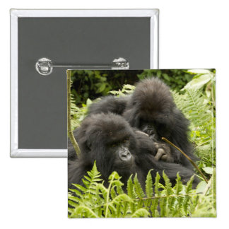 Mountain Gorilla, family in day nest 2 Inch Square Button
