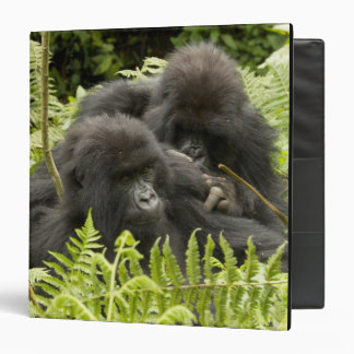 Mountain Gorilla, family in day nest Binder