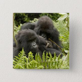 Mountain Gorilla, family in day nest Pinback Button