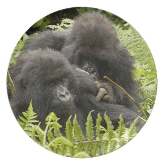 Mountain Gorilla, family in day nest Plate