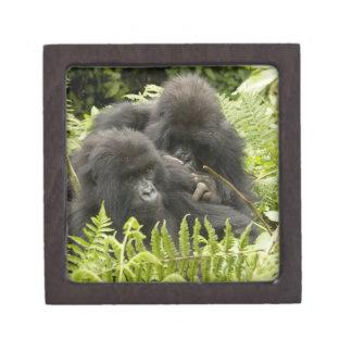 Mountain Gorilla, family in day nest Premium Keepsake Boxes