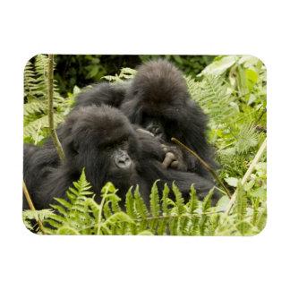 Mountain Gorilla, family in day nest Rectangular Photo Magnet