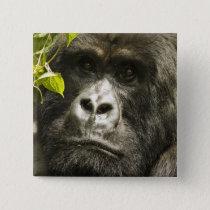 Mountain Gorilla, Gorilla beringei beringei, Button