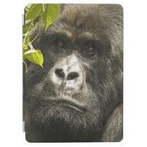 Mountain Gorilla, Gorilla beringei beringei, iPad Air Cover