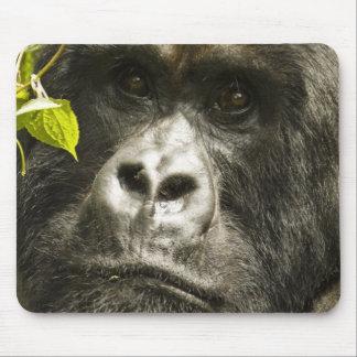Mountain Gorilla, Gorilla beringei beringei, Mouse Pad