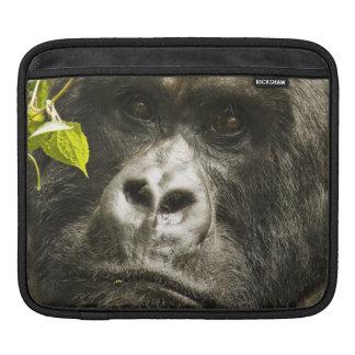 Mountain Gorilla, Gorilla beringei beringei, Sleeve For iPads
