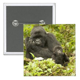 Mountain Gorilla, Gorilla beringei (formerly G. Button