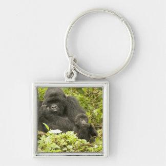 Mountain Gorilla, Gorilla beringei (formerly G. Silver-Colored Square Keychain
