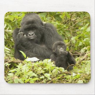 Mountain Gorilla, Gorilla beringei (formerly G. Mouse Pad