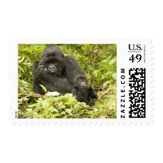 Mountain Gorilla, Gorilla beringei (formerly G. Postage