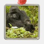 Mountain Gorilla, Gorilla beringei (formerly G. Square Metal Christmas Ornament