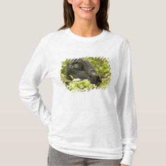 Mountain Gorilla, Gorilla beringei (formerly G. T-Shirt