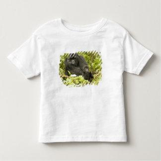 Mountain Gorilla, Gorilla beringei (formerly G. Tee Shirt