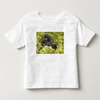 Mountain Gorilla, Gorilla beringei (formerly G. Toddler T-shirt