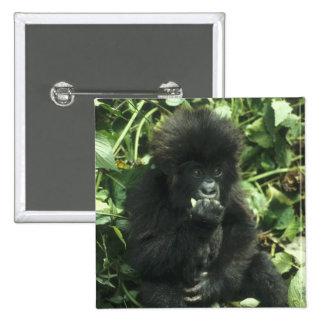 Mountain Gorilla, (Gorilla gorilla beringei), Button