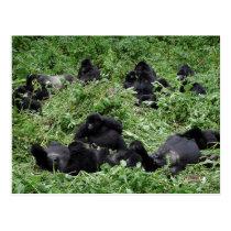 Mountain gorilla group postcard