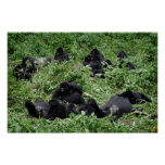 Mountain gorilla group poster print