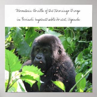 Mountain Gorilla of the Nkuringo Grou... Poster