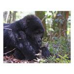 Mountain Gorilla Personalized Announcements
