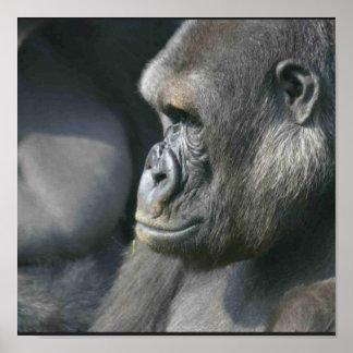 Mountain Gorilla Poster Print