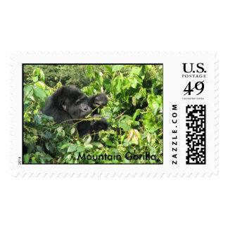 Mountain Gorilla Solo eating Postage