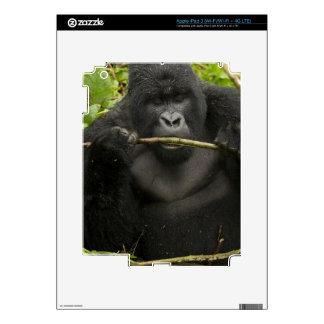 Mountain Gorilla, using tools Decal For iPad 3
