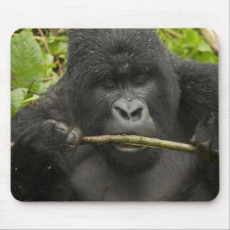 Mountain Gorilla, using tools Mouse Pad