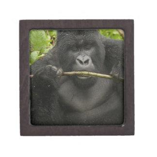 Mountain Gorilla, using tools Premium Keepsake Box