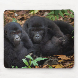 Mountain Gorillas, Volcanoes National Park Mouse Pad