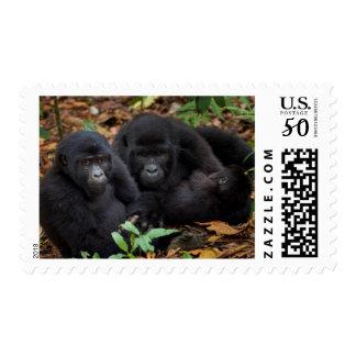 Mountain Gorillas, Volcanoes National Park Postage
