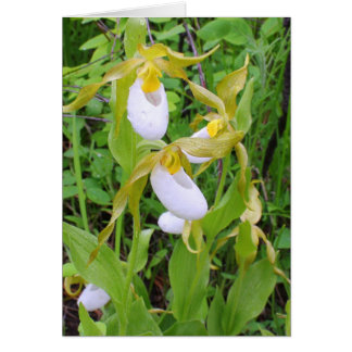 Mountain Lady's Slipper Card