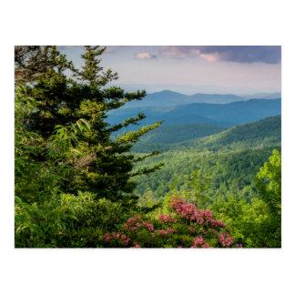 Mountain Laurel at Sunrise Postcard