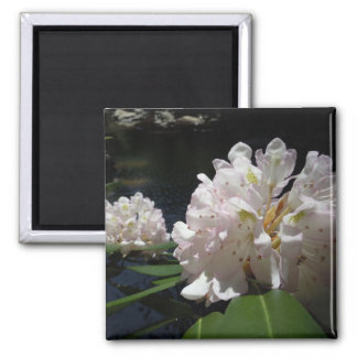 Mountain Laurel by a Creek 2 Inch Square Magnet