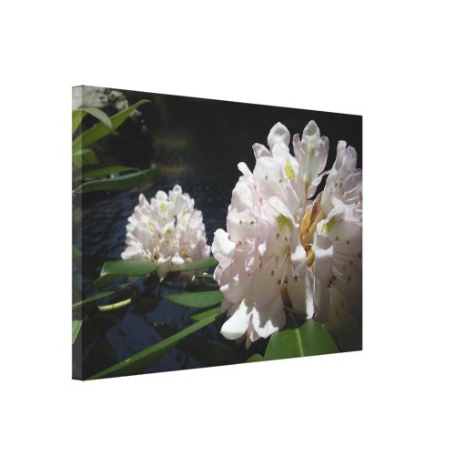 Mountain Laurel by a Creek Gallery Wrap Canvas