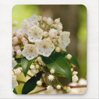 Mountain Laurel in bloom Mouse Pad