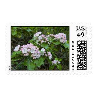 Mountain Laurel Stamp