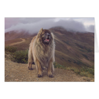mountain Leonberger Card