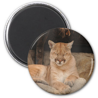 Mountain Lion 2 Inch Round Magnet