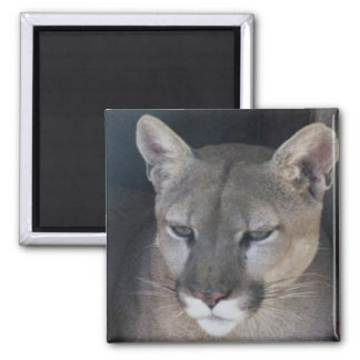 mountain lion 2 inch square magnet