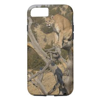 Mountain Lion, aka puma, cougar; Puma concolor, 2 iPhone 7 Case