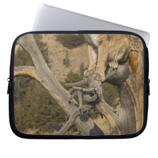 Mountain Lion, aka puma, cougar; Puma concolor, 2 Laptop Sleeves