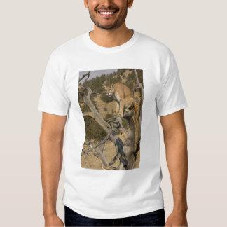 Mountain Lion, aka puma, cougar; Puma concolor, 2 Shirt